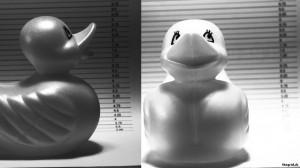 Ente-Fahndung